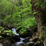 黒岩渓谷2